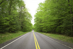 Straight mountain road in green forest Stock Images