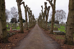 Straight and narrow. Two lines of pruned lime trees in midwinter converging on a graveyard chapel Royalty Free Stock Photography