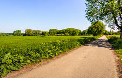 Straight and narrow country road in springtime Royalty Free Stock Photography