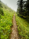 Straight and narrow path Royalty Free Stock Photography