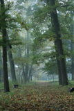 Straight path in morning foggy forest. Straight path covered with fallen leaves in morning foggy forest Royalty Free Stock Photos