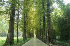 Free Straight Path Road In Park Royalty Free Stock Images - 113353629