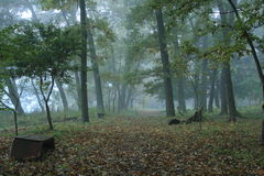 Straight path and wooden bench in morning foggy forest. Straight path and wooden bench covered with fallen leaves in morning foggy forest Royalty Free Stock Images