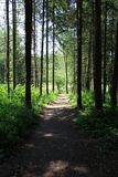 Straight path in the woods Royalty Free Stock Photo