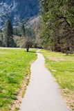 Straight Pavement, Yosemite National Park Stock Photos