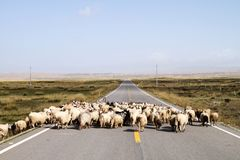 Straight road. Full of sheep Royalty Free Stock Photography