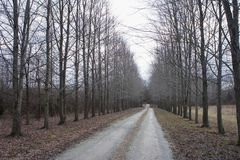 Straight road with dry tree road aside. Saw at Purdue, Indiana Stock Photography