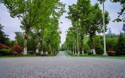 Straight road Royalty Free Stock Photo