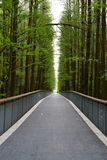 Straight Road flanked by green trees in green road Linan, Zhejiang, China stock photo