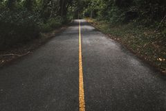Straight road in forest. Straight road into the forest Stock Photos