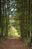 Straight road in forest covered with brown leaves Stock Photography