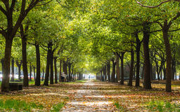 Straight road in forest covered with yellow leaves Royalty Free Stock Photo