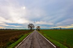Straight rural road in Po Valley Royalty Free Stock Image