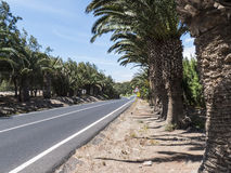Straight road surrounded by palm tress. Royalty Free Stock Photography