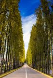 Straight Road Surrounded With Trees Royalty Free Stock Image
