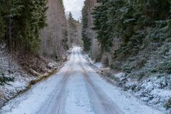 A straight road through a swedish forest in december stock image