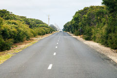 Straight road throught bushes Stock Photos
