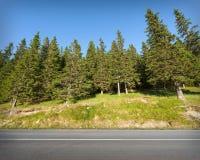 Straight road towards the beautiful trees stock photography