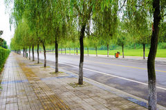 Straight road with trees Stock Images