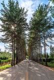 Straight road. With trees on both sides Stock Photo