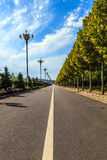 Straight road. With trees on both sides Royalty Free Stock Photo