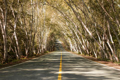 Straight road with trees Stock Photos