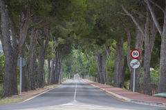 Straight road. Straight road with trees on the sides Royalty Free Stock Photo