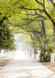 Straight road under trees. Straight road under green trees,several persons' image hardly can seen Royalty Free Stock Photo