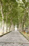 Straight road under trees Royalty Free Stock Image