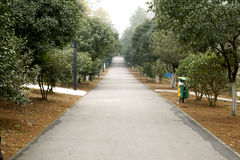 Straight road under trees. Straight road under green trees in park Stock Photo