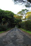 Straight road under trees Royalty Free Stock Images