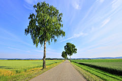 Romantic road in wheat field Stock Photo