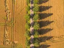 Straight Road in Wheat Field Aerial View Stock Images