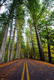 Straight road in wild forest with tall autumn trees Stock Photography