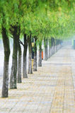 Straight road with willows. Background Stock Images