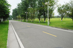 Straight road with willows Stock Photo