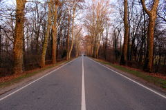 Straight road in a wood. In winter Stock Image