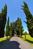 Straight single lane road with vanishing point between rows of tall cypress trees in the countryside of Italy. Italian single lane country road between rows of Stock Images