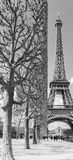 Straight trimmed trees near Eiffel tower in Paris France in black and white Royalty Free Stock Image