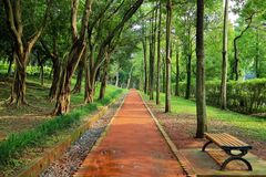 Straight walk path in the park. Straight walk path through forest in the park Royalty Free Stock Image