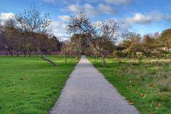 Straight winter garden path Stock Photo