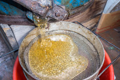 Strain the poured honey through a sieve. Filtering raw honey. Honey pouring through a sieve from honey extractor Royalty Free Stock Image