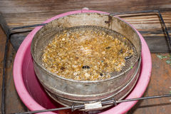 Strain the poured honey through a sieve. Filtering raw honey. Honey pouring through a sieve from honey extractor Stock Photos