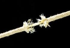 Straining rope. Royalty Free Stock Image