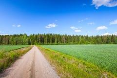 Strait empty rural road near green field Royalty Free Stock Photos