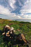 Strait of Gibraltar with mushrooms in the foreground, Tarifa, Sp Stock Photography