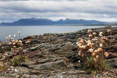 Strait of Magellan, Chile Royalty Free Stock Image