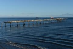 The Strait of Magellan at Punta arenas. Stock Photos