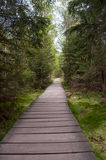 Strake through the forest. Wooden path made through the protected forest Royalty Free Stock Photo