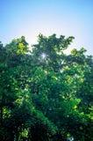 Stralen die van zon door de boomtakken komen Stock Fotografie